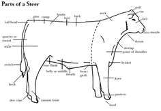 Learning to judge Livestock Judging Programs: How to Judge Beef, Sheep, & Swine Livestock Judging, Showing Livestock, Show Cows, Show Steers, Raising Cattle, Animal Science, Ag Science, Dairy Cattle, Show Cattle