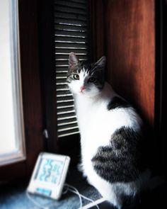 #kasperithecat #catsofinstagram #cats #instacat