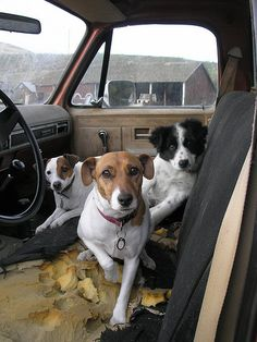 Road dogs #jrt