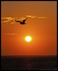 ✯ Sunset Bird