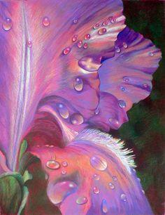 Veronica Winters - Iris (Colored Pencil)