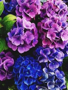 """""""You are an artist and your heart is a masterpiece."""" -unknown Photo taken by me. Purple Flowers Wallpaper, Flower Background Wallpaper, Beautiful Flowers Wallpapers, Flower Backgrounds, Hydrangea Flower Photos, Flower Images, Flower Pictures, Flower Art, Lisianthus Flowers"""