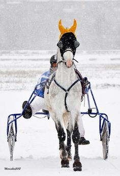 Harness Racing in Russia.  I wonder if the deafeners are used to keep ears warm?