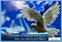 Spirituality, Animals, Pictures, Animales, Animaux, Spiritual, Animal, Animais