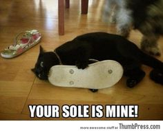 Today funny animals (10:55:05 PM, Thursday 22, December 2016 PST) – 39 pics