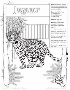 Second Grade Life Science Worksheets: Jaguar Facts Rainforest Crafts, Rainforest Project, Rainforest Activities, Rainforest Theme, Animal Activities, Rainforest Classroom, Animal Science, Learning Activities, Plant Science