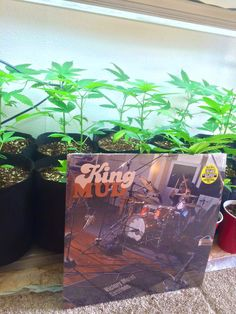 KING MUD love from Colorado! | Alive Naturalsound Records