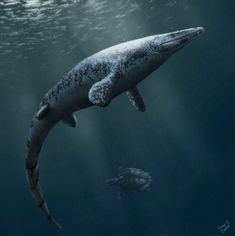 Angolasaurus_artwork.jpg (950×954)