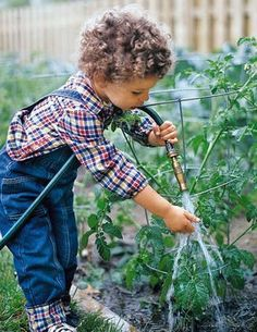 Child+watering+plants+with+garden+hose+ 2352 19288546 0 0 7002687 300 Using Essential Oils in the Garden Garden Pests, Garden Tools, Garden Hose, Potager Garden, Oil Garden, Fruit Garden, Green Garden, Edible Garden, Tomato Cages