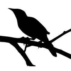 /free svg/dn/Mockingbird in silhouette by @gurdonark, A photograph of a mockingbird was used as the basis to trace this outline using Inkscape. The resulting photo of a mockingbird in silhouette becomes an .svg in silhouette through the miracle of bitmap trace.Bird: northern mockingbird in a live Oak Tree, Glendover Park  Allen, Texas, USA, from a photo by gurdonark
