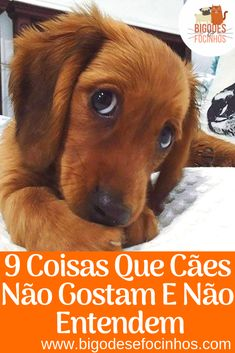 Baby Dogs, Dogs And Puppies, Animals And Pets, Cute Animals, Dog Health Tips, Dog Hacks, Love Pet, Pet Shop, Fleas