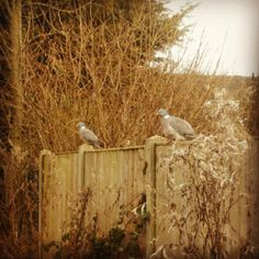 My stalker and his wife. He watches me when I do the dishes, I think he wants to add me to his hareem. Pigeon, Dishes, Watches, Instagram Posts, Animals, Animales, Animaux, Tablewares, Clocks