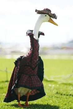 Farmer Hires Dressmaker To Style His Ducks In Fanciful Costumes - DesignTAXI.com