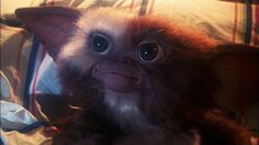 Sounds Like a 'Twisted and Dark' Gremlins 3 Might Actually Happen