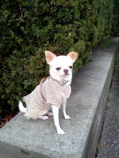 Tess in her finest clothes from INAMORADA of Italy. Gorgeous collar from FOR PETS ONLY of Italy. tessandi.com