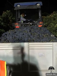 A Pictural Narrative to a Paso Robles 2015 Harvest