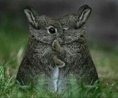 Love. -  cute little funny bunnies