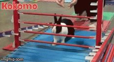 Rabbit Competitions. Worth a click. This particular gif made me laugh out loud. -B