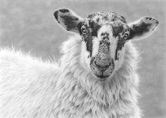'Mule Portrait' by Nolan Stacey