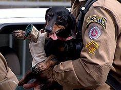 Cachorro foi retirado da casa por equipe de resgate  do Corpo de Bombeiros