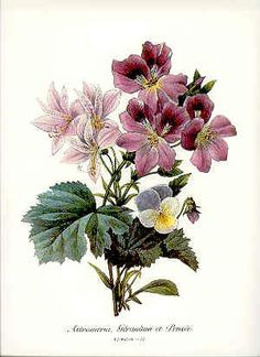 *These beautiful vintage Pierre Joseph Redoute botanical prints are original BOOKPLATES professionally removed from an out of print book that is