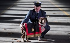 'Buster saved my life every day we were together' Meet the dog who saved a thousand lives: RAF Police Flight Sergeant Will Barrow says his arms and explosives detection dog became his best friend