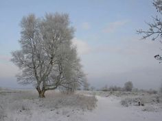 Winter op Dwingelderveld
