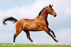 Bildergebnis für pferdefotos