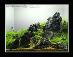 Mini M Sized Scape (ISTA Comp result last page) - Page 5 - The Planted Tank Forum