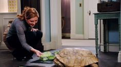 Rizzoli and Isles-Maura and her tortoise-tvequals.com