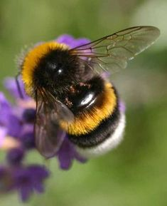 """Aerodynamically speaking, these amazing creatures should not be able to fly. Proof that if God says, """"It will be, then IT WILL BEE!!"""""""