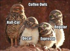 Coffee Owls xD