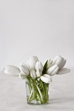 tulips... all white...