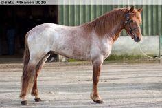Connemara - stallion Mirahs Dancer