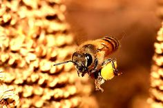 Busy Busy Honey Bee