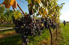 Loudon County Wine Trail