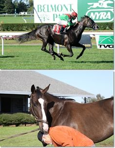 EULONIA made it easy at Belmont Park in her second win. The 4-year-old filly has come a long way since last winter when she was still unraced and curious about this Barry Irwin guy checking her legs. | Horse racing