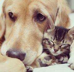 El Amor Entre Perros y Gatos