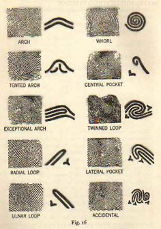 Fingerprint patterns (OP)
