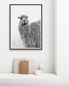 Catching our breath in the thin air of the high altitude city of Cusco, Peru - we spotted Pedro among the Incan ruins in all his textured glory. As we lay stomach down in the dirt, he looked over wearing what we can only surmise as a 'mildly amused' expression.  #llama #print #artprint #wallart #blackandwhite #nursery #home #decor #interior #scandi #boho #loungeroom #styling #art #funny #photography Nursery Prints, Wall Art Prints, Fine Art Prints, Framed Prints, Modern Prints, Modern Wall Art, Highland Cow Art, Llama Print, Paper Plants