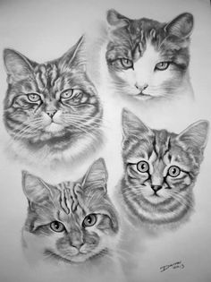 precioso Pet Rocks, Cats And Kittens, Kitty Cats, Realistic Drawings, Cat Face, Dog Art, Line Drawing, Illustration Art, Illustrations