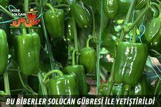 Stuffed Peppers, Vegetables, Stuffed Pepper, Vegetable Recipes, Stuffed Sweet Peppers, Veggies