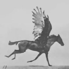 Eadweard Muybridge - Flying Horse [Plate 785] 1904 on Vimeo