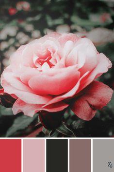 ZJ Colour Palette 582 #colourpalette #colourinspiration