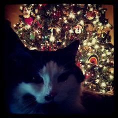 Christmas Kitty, #christmas, #christmastree, #cat, #animal