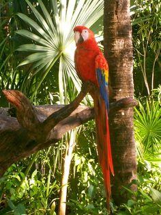 La colorida guacamaya en su habitat