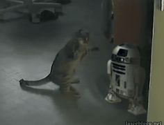 ...is this the droid you are looking for?