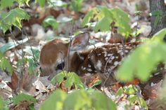 I spy a baby fawn in Vilas County, Wisconsin.     For tips on how to find and photograph wildlife, check out this site.