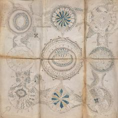 The Unread: The Mystery of the Voynich Manuscript - The New Yorker