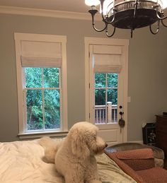 Auto descend lined sheer roman shades for a client. Puppy Fen approved it too . #customwindowcoverings #romanshades #fabric #autodescend #sheer #decor